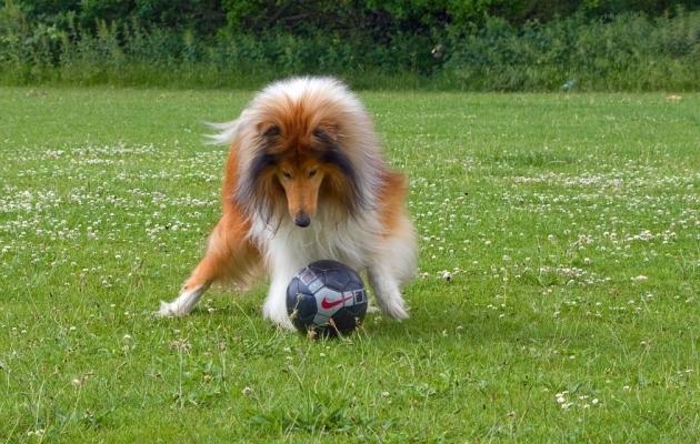 Koer on ka jalgpalluri parim sõber. Foto: Pixabay.com